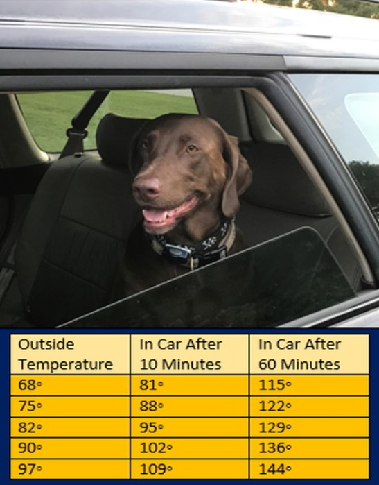 Table of information showing outside temperature and the temperature inside of a car after 10 and 60 minutes